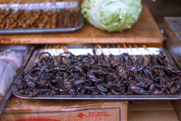 Grilled scorpions anyone?