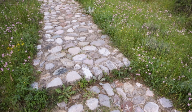 Beautiful footpath with wild flowers all over.